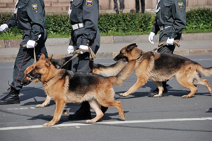 Was bedeutet Unterordnung in der Hundeerziehung?