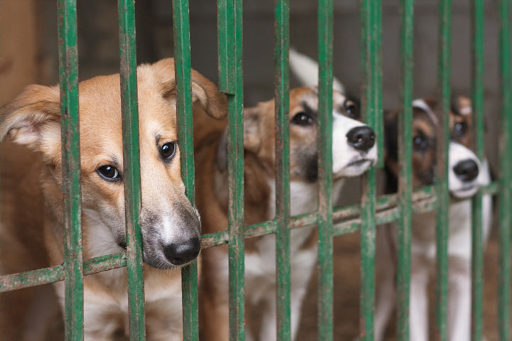 Tierheim Hunde