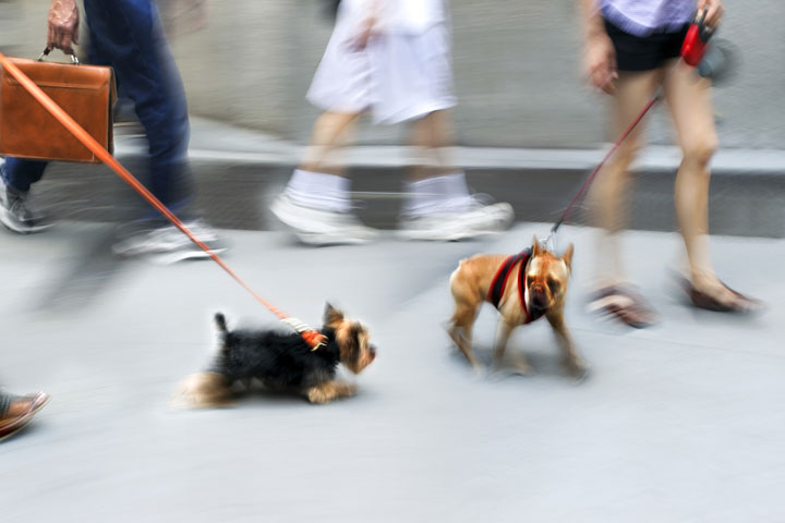 Hunde an der Leine