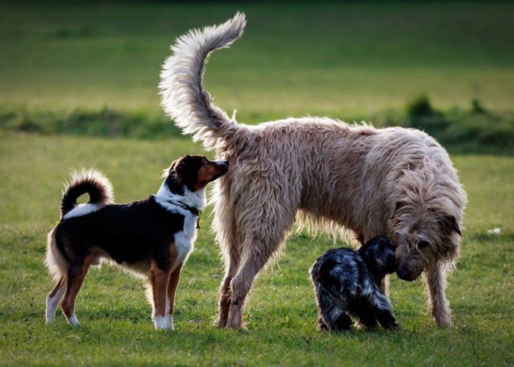 Ist das Verhalten unserer Hunde abhängig von ihrer Rasse?
