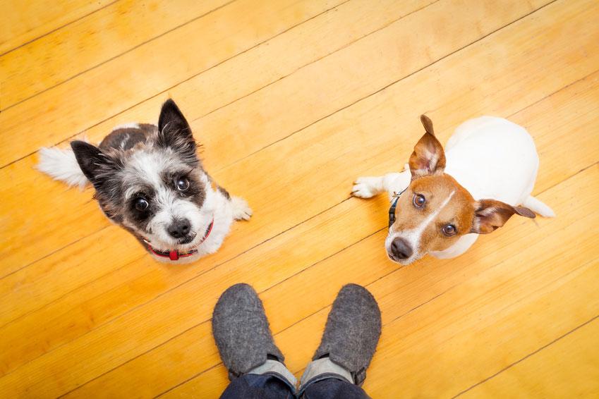 Hund Orientierung am Menschen