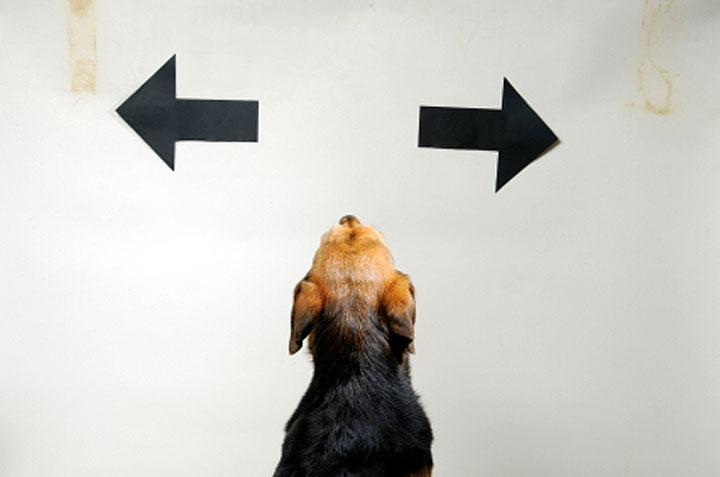 Konditionierung von alternativem Verhalten