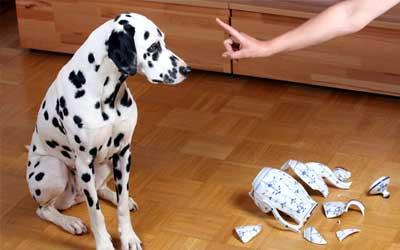 perfect dogs nonverbale hundeerziehung artgerecht und gewaltfrei. Black Bedroom Furniture Sets. Home Design Ideas
