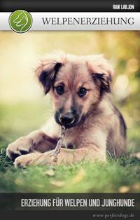 Welpenerziehung - Erziehung für Welpen und Junghunde